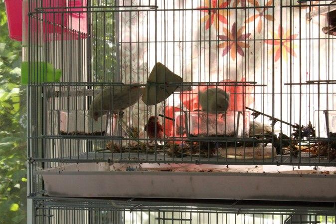 "Фотографии ""птичей комнаты""  - Страница 3 Tld0HVL0TUE"