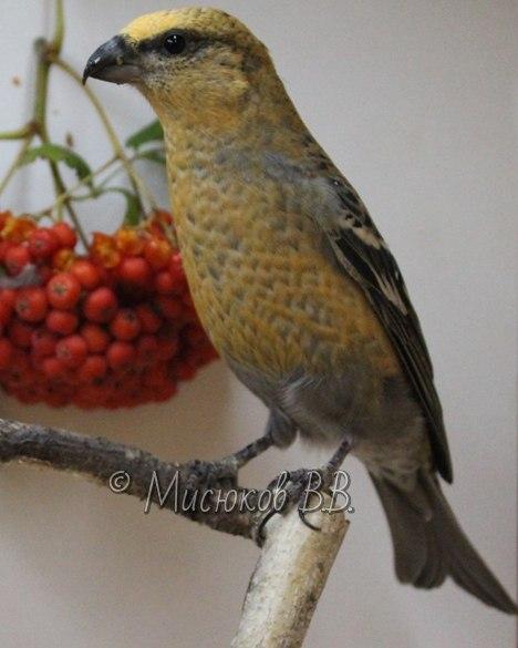 Фотографии моих птиц  - Страница 3 8LLKijiyWTA
