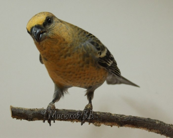 Фотографии моих птиц  - Страница 3 RPdrKNMzhcM