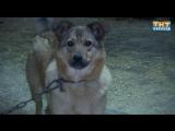 Воркута. Проблема собак в Воркуте (Выпуск 29.11.15)