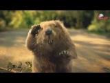 Веселая реклама шин Bridgestone c бобром! Merlik.ru