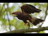 Скорость жизни Хищники Юго-Запада (Документальные фильмы, передачи)