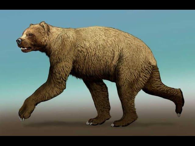 Доисторические хищники — Короткомордый медведь (Документальные фильмыo HD)