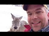 Глухой американец спас провалившуюся под лед олениху