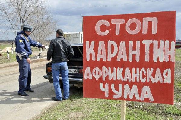 Карантин из-за вспышки африканской чумы свиней намерены ввести в Крыму
