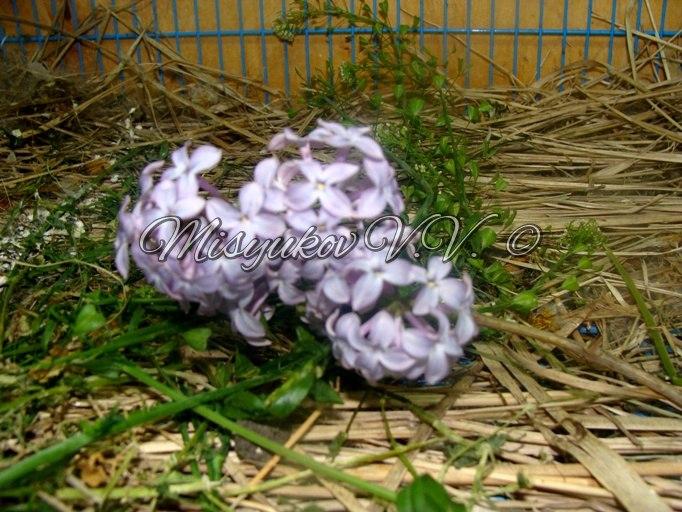 Кормление птиц - Страница 2 Ocua5OB1110