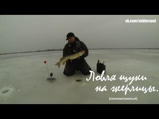Ловля щуки на жерлицы в декабре. Зимняя рыбалка. Видео отчет от 3.12.2015 г.