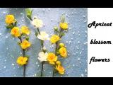 Cách làm hoa mai từ giấy nhún - Apricot blossom paper flowers | by Dzung Mac