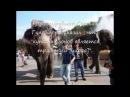 По улицам слонов водили Владивосток