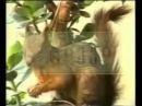 Грузинский алфавит с видеоиллюстрациями - 3 (deda ena - 3)