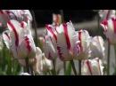 П.И.Чайковский- Сентиментальный вальс - Tchaikovsky Valse Sentimentale