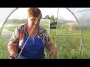 Выращивание томатов. Советы Юлии Миняевой