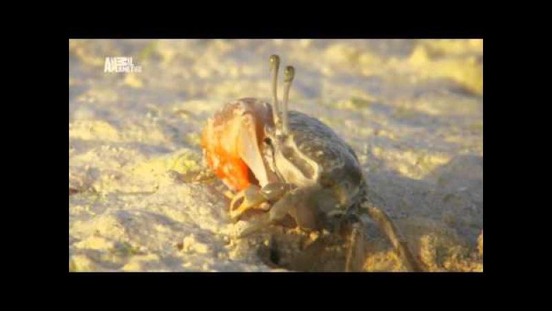 Неизведанные острова - Занзибар (Zanzibar)