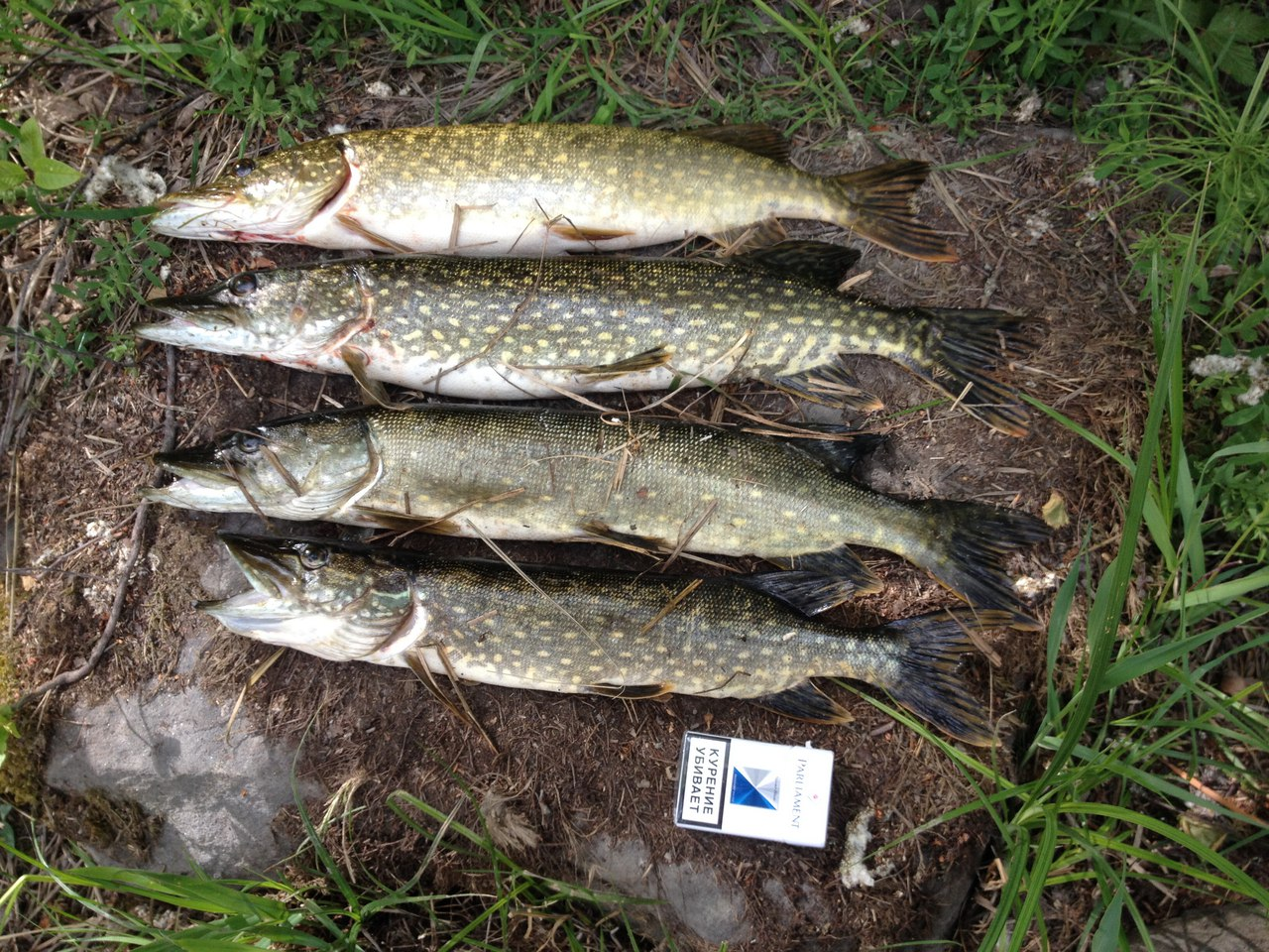 Улов после рыбалки на Хуторе Салокюля