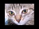 ИНВАЛИД И КОТ ♌ Disabled and the cat / До слез трогательный ролик ǀ КОТ ǀ Cats ǀ STORY ABOUT A CAT