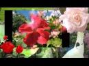 ВИА Цветы -  Есть глаза у цветов
