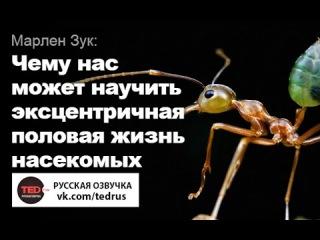 TED RUS x Марлен Зук: Чему нас может научить эксцентричная половая жизнь насекомых | Marlene Zuk