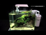 The Art of the Planted Aquarium 2015 - Scaper's Tank (Nano) category, part 9