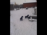 первое знакомство с улицей и снегом