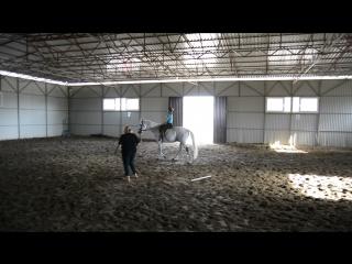 Моя первая треня(конный спорт.клуб Мустанг)