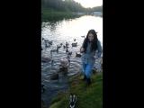 Лебеди и настырные утки на Витьбе (Витебск)