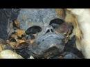 Артефакты пришельцев Записки инопланетян Амазонки из Атлантиды Территория заб