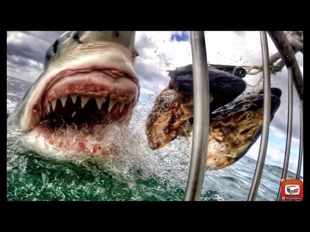 Самые Необычные Находки в Желудке Акул