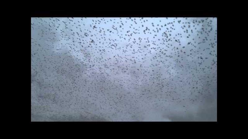 маневри ескадри ворон-бандерівців у Тернополі