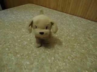 Видео обзор детская игрушка - Интерактивная собака Дружок (kidtoy.in.ua)