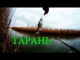 ТАРАНЬ. Ловля в проводку маховой удочкой. Рыбалка. Ловля тарани на поплавочную удочку. fishing
