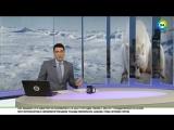 WWF назвал убийство белой медведицы на острове Врангеля садизмом