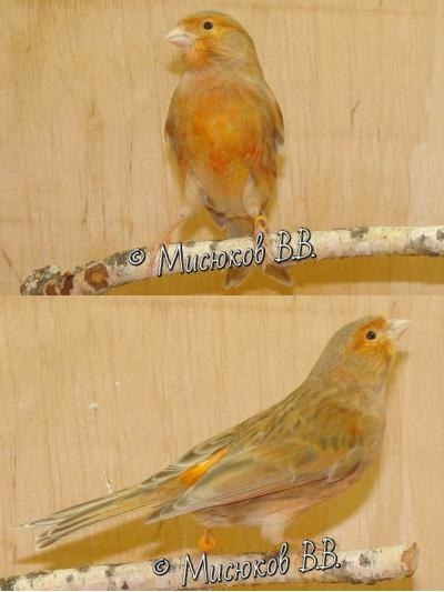 Фотографии моих птиц  - Страница 3 _Kgdp1wi6bQ