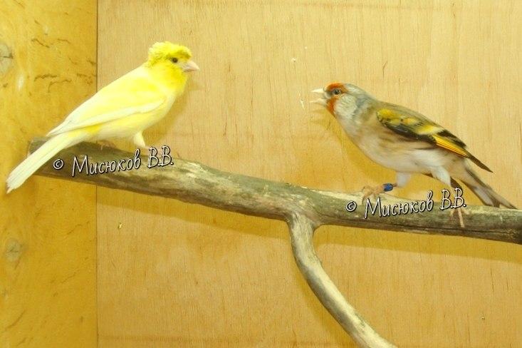 Фотографии моих птиц  - Страница 3 5BfWIR0XdTo