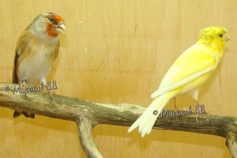 Фотографии моих птиц  - Страница 3 9TAbSnmc3Gs