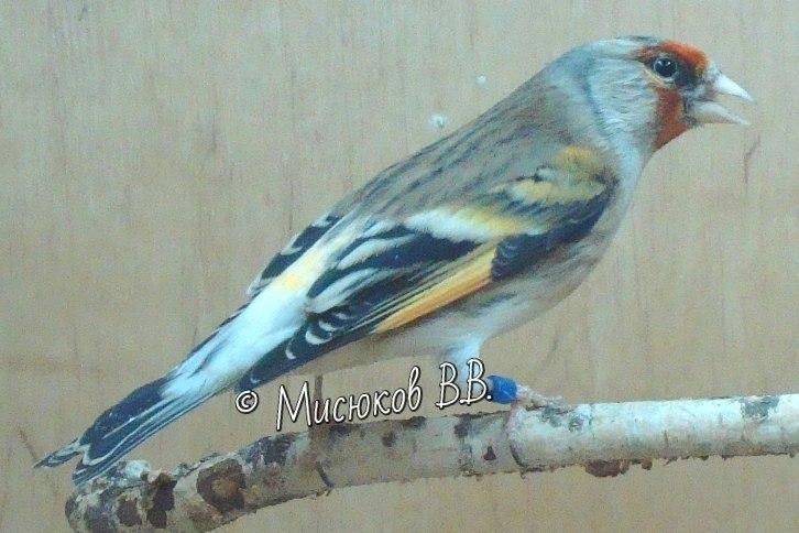 Фотографии моих птиц  - Страница 3 9GjUiVkvojk