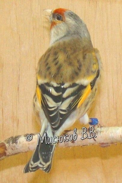 Фотографии моих птиц  - Страница 3 JuaBhYY1NlM