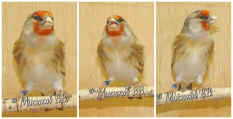 Фотографии моих птиц  - Страница 3 1zqShLyje1Q