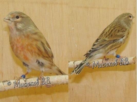 Фотографии моих птиц  - Страница 3 EV3pN7LP8dE