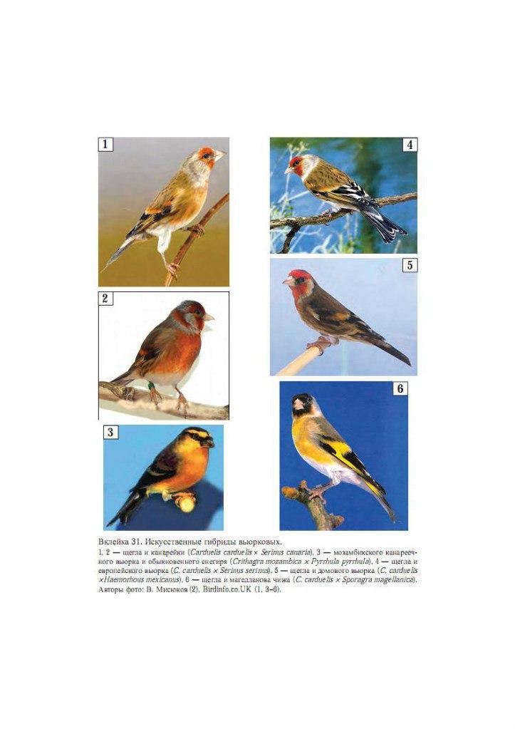 СМИ о моих птицах Qd4gRBQ-LKI