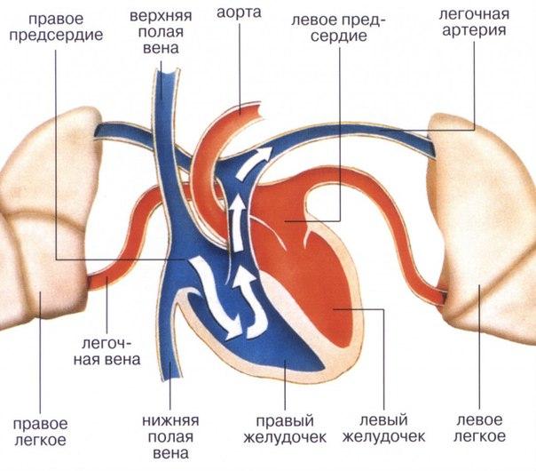 Перинеорафия