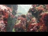 2015. Крым. Гурзуф. Подводный пейзаж