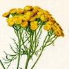 Лекарственные растения и народная медицина