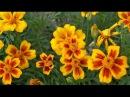 Семена цветов Сроки посева семян