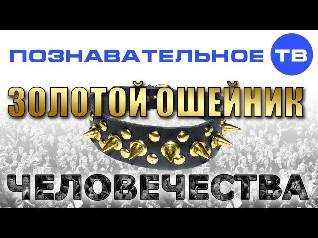 Золотой ошейник человечества Познавательное ТВ Валентин Катасонов