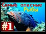 ТОП 10 Самых опасных рыб в мире|HD Качество|Лучшие TOP10|