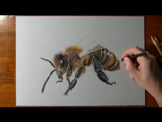 How i draw a bee