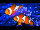 Stunning Aquarium The Best Relax Music 2 Hours Sleep Music HD 1080P