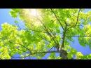 Ченнелинг 6 05 2015 Плеяды Морея О вспышке на Солнце