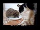 Ёжик и котик. Прикол, как Ёжик с Масянькой делиться не стал. Ridiculous video.