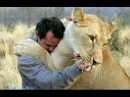 Tigers, Lions And Cheetahs Love To Cuddle - Big Cats Compilation